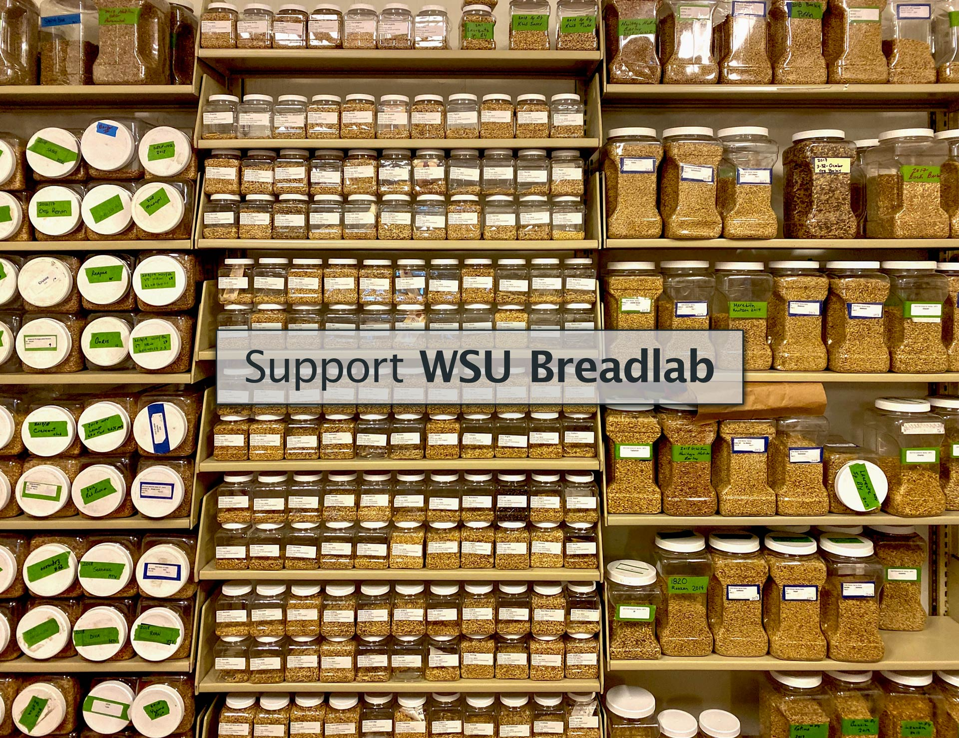 """Support WSU Breadlab"" over image of shelves loaded with clear containers of grain."