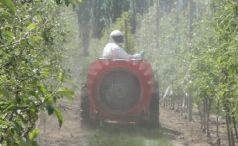 View of an arblast sprayer as it passes down an orchard row while actively spraying; a mist is emanating from the back of the sprayer as it reaches the trees on either side of the row.