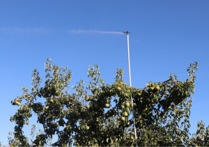 Image shows an irrigation riser above the tree using a Rainbird sprinkler head.