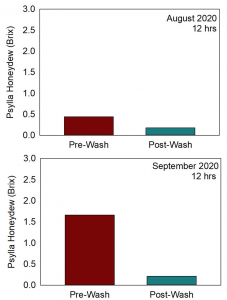Two charts showing the results for the August and September wash timings. The August chart shows that the honeydew level measured on the Brix scale is about 0.5 at Pre-wash and and less than half of the that after washing. The second chart, Septermber timing, shows the pre-wash honeydew level just above 1.5 Brix compared to roughly 0.25 for the post-wash shoot.