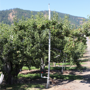 Image shows the riser and under-tree unit placement in the orchard.