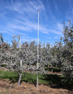 This image is from a more distant vantage to show the full height of the over-tree sprinkler in ration to the surrounding trees.