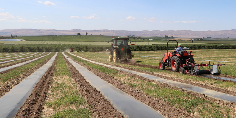 image shows a tractor with the film spool applicator laying down the barrier following behind the rototiller tractor.