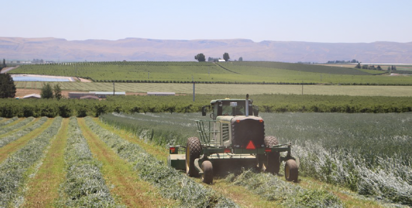Tractor shown mowing triticale in rows.