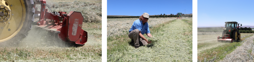 Three-panel image: First image is close-up of the flail mower attachment in action; second image shows grower kneeling down and golding up a handful of the resulting chopped material; third image shows the tractor with flail mower moving down the row.
