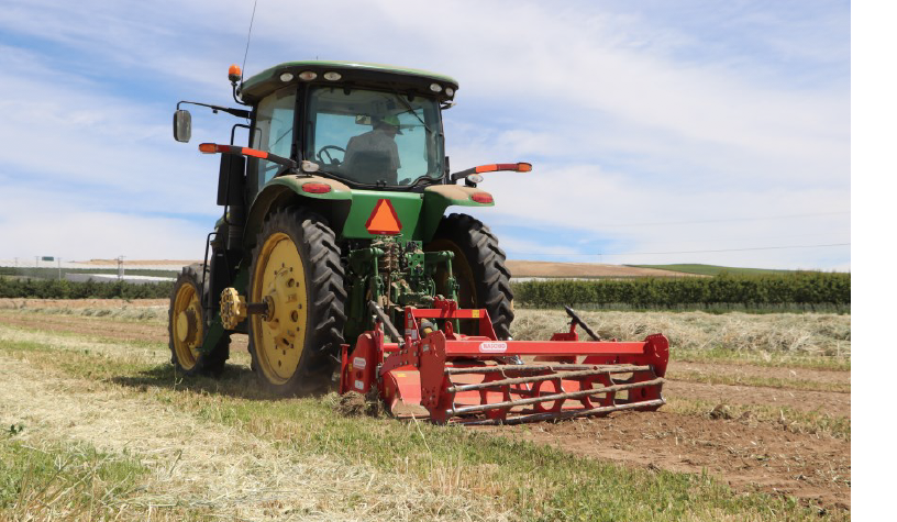 Tractor with rototiller attachment going down a row.