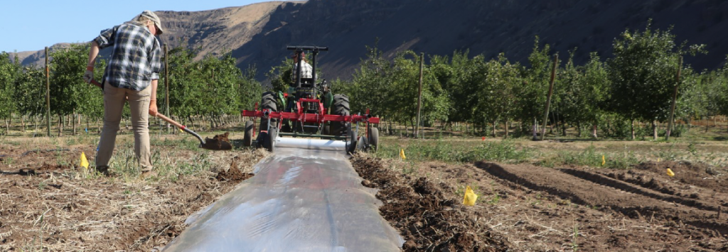 Image shows person shoveling soil along edges of tarp to seal following tractor as it lays tarp in row.