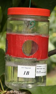 clear plastic jar with a red lid and red tape around the center circumference of the jar with small mesh covering holes cut in the jar
