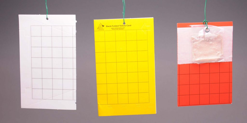 three rectangular cards with grid square pattterns on them hanging from green wires; white, yellow and red with a clear bag of lure