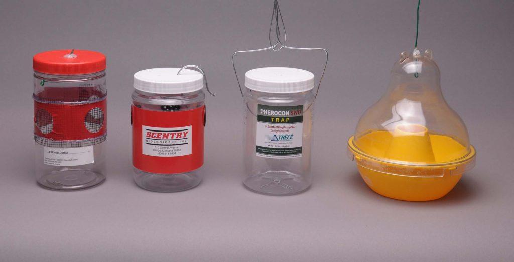 four jars used for liquid bait traps