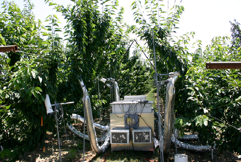 Equipment in the orchard to measure doubling