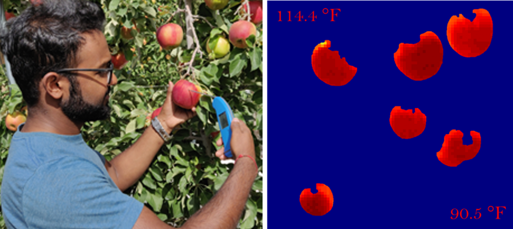 apples with different temperature
