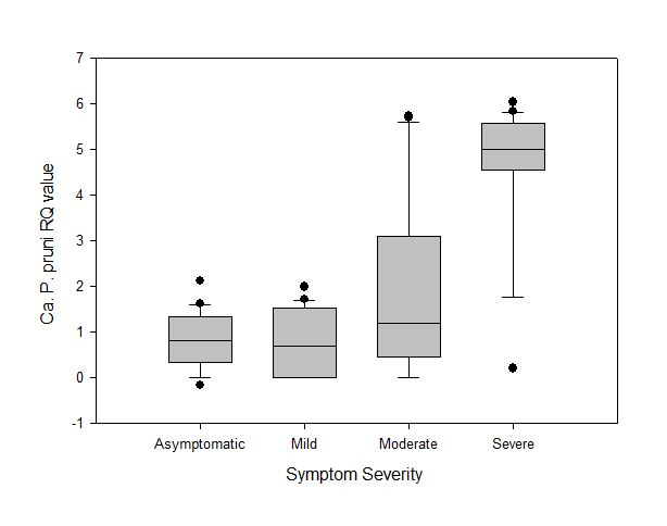 Box plot with higher RQ values of Ca P. Pruni in severe and moderate symptoms