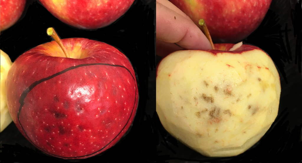 apple fruit with brown lessions in the peel and the flesh