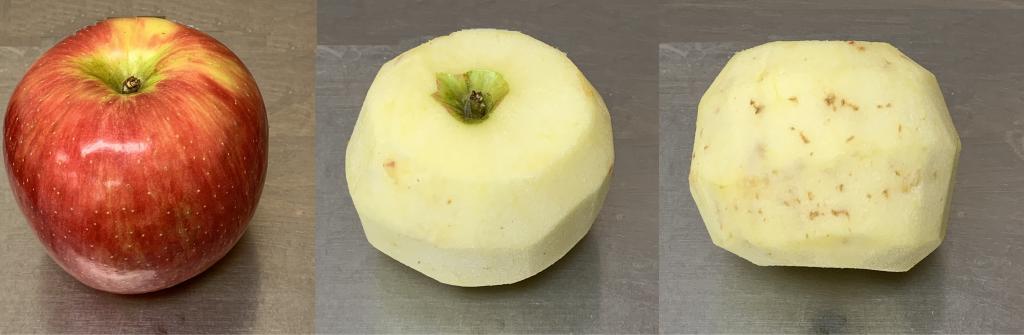 Honeycrisp appearing healthy with internal necrosis