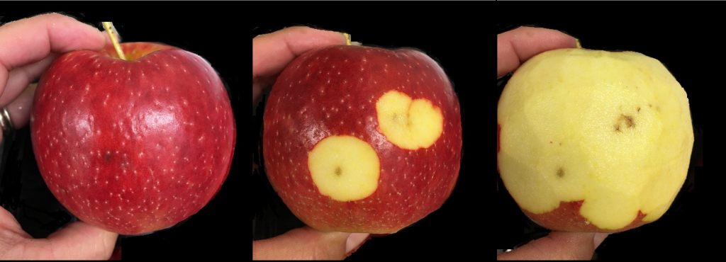 Healthy Juici from outside and necrotic inside