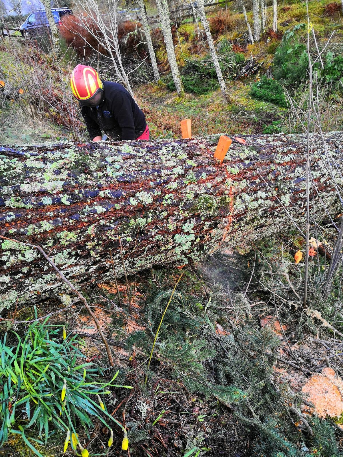 Mark cutting the first log