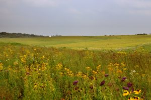 Tallgrass prairie landscape