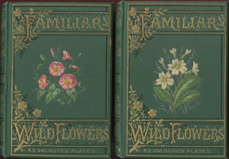 Familiar Wild Flowers Figured and Described / F. Edward Hulme picture number 1