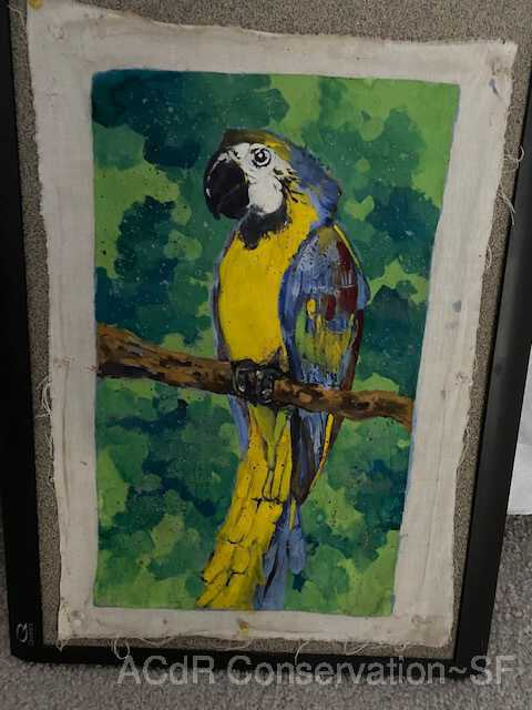 Blue macaw picture number 1