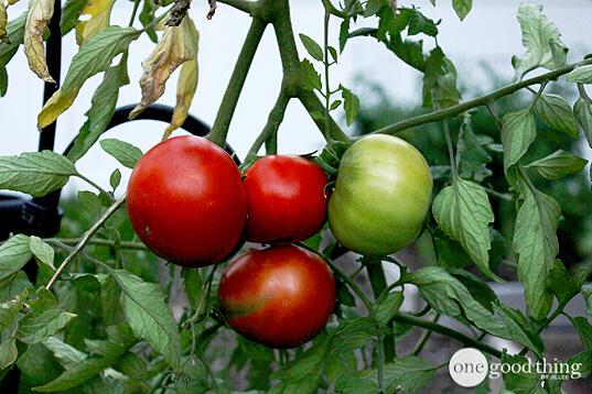 Storing Vegetables