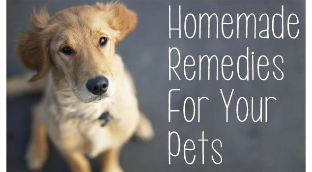 homemade-remedies-for-pets