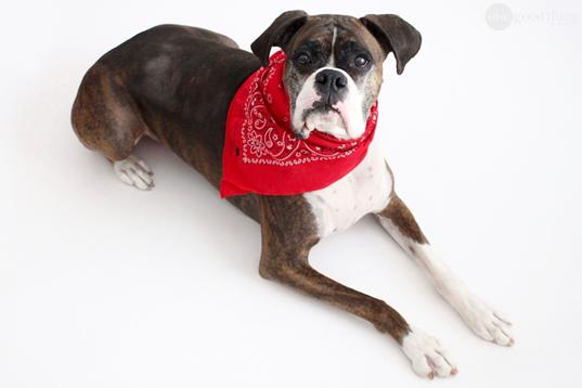 Homemade Dog Flea Collar