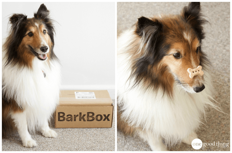 Keeping Your Dog Busy and Happy