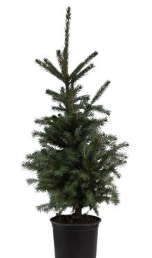 eco-friendly-christmas-tree