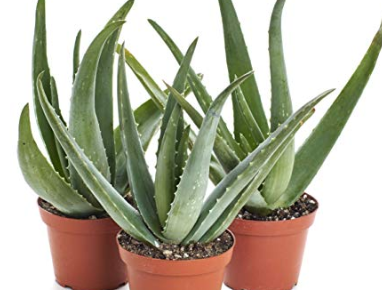 hassle-free-indoor-plants