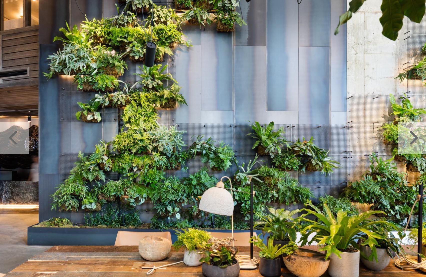 living-plant-walls