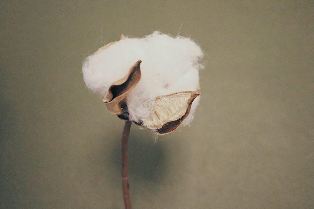 organic-cotton-feminine-care