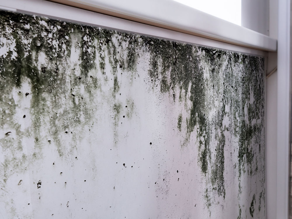 mold damage caused by fire damage