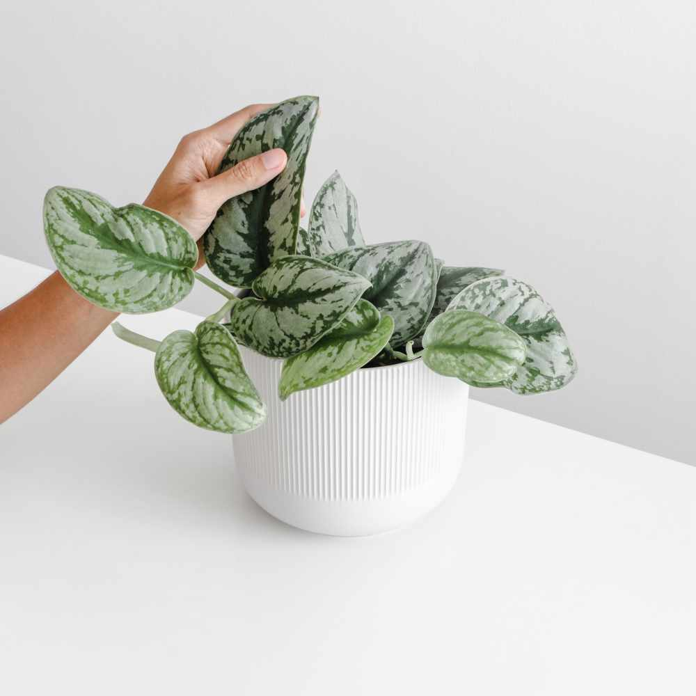 womens-hand-touch-the-leaf-of-the-houseplant-on-wh-7YJFVZ7.jpg