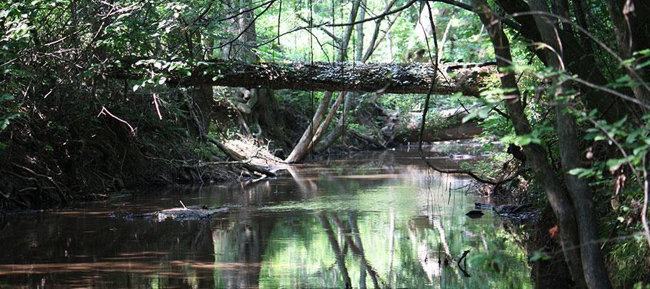 A shady stream