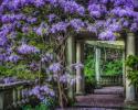 Photo of purple flowers.