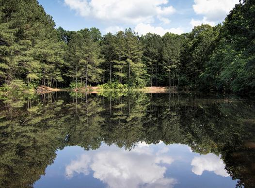 Photo of trees and lake at Mabry Park