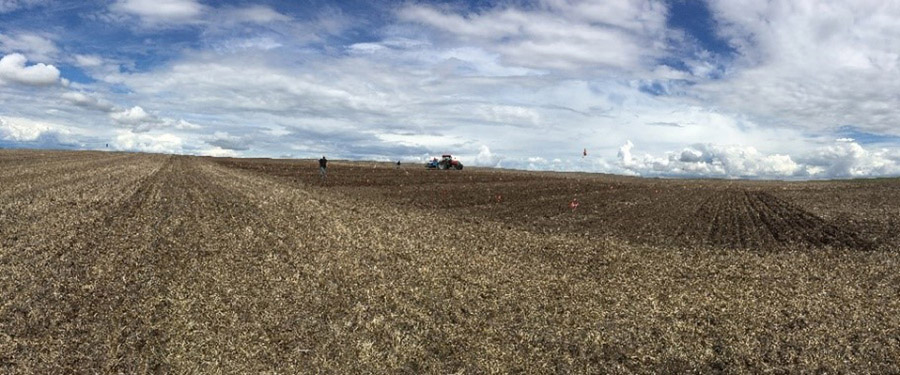 Planting canola in a field.