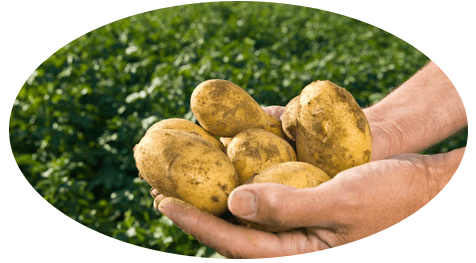 https://potatoes.decisionaid.systems/