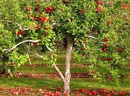 https://decisionaid.systems/Apple tree
