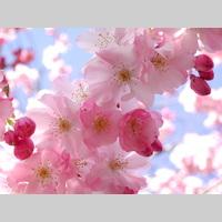 36774405 free spring wallpaper