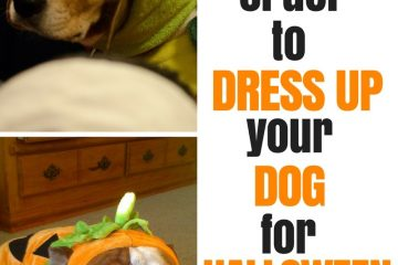 Is it Cruel to Dress Up Your Dog for Halloween 1