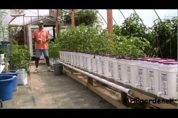 Dutch Bucket Hydroponics - How It Works & How to Make Your Own Buckets