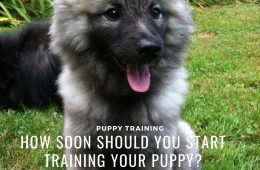 puppy training2