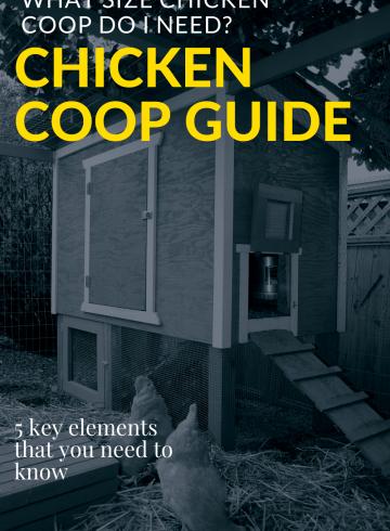 Chicken Coop Guide