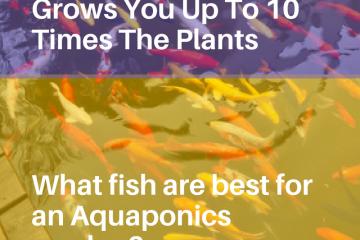 AQUAPONICS1