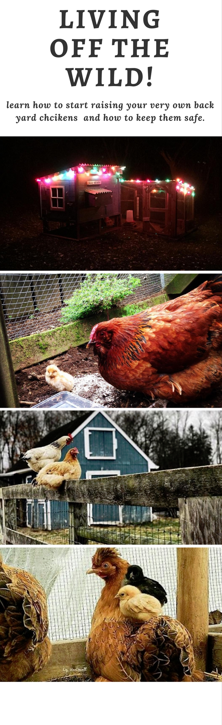 5 Simple Steps on How to Build a Backyard Chicken Coop ...