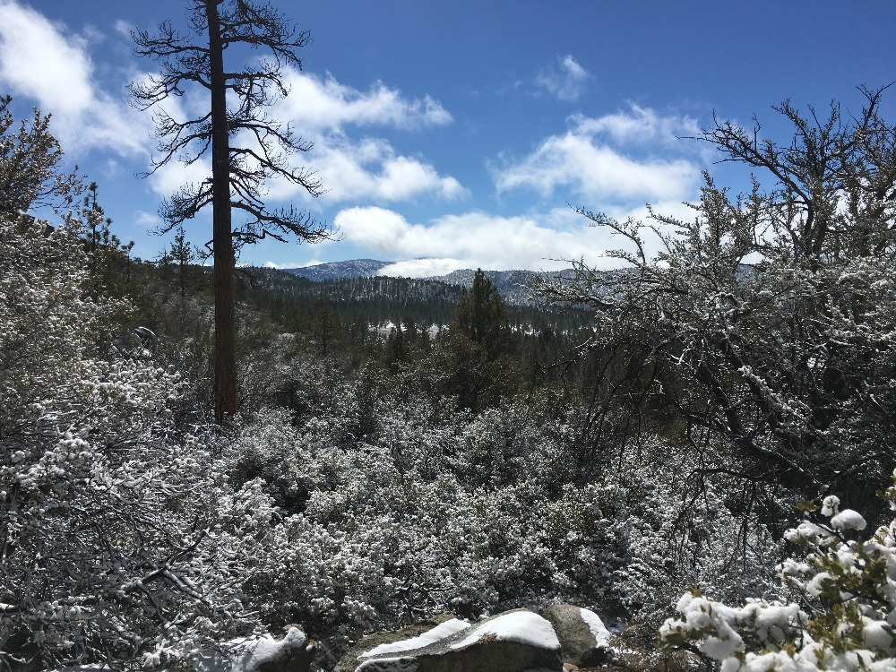 Trail Review: 3N16 - Holcomb Valley