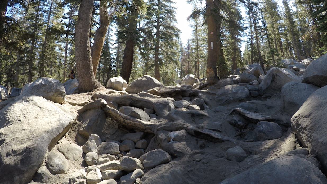 26E213 - Coyote Lake Trail - Waypoint 4: The Roots