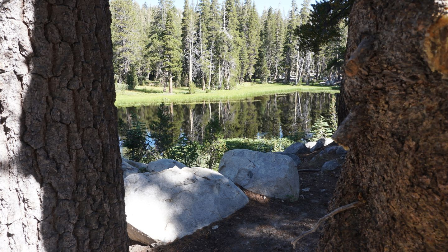26E213 - Coyote Lake Trail - Waypoint 3: Meadow / Pond